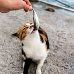 Are Sardines Good For Cats?
