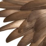 HOW TO CLIP BIRD'S WINGS AT HOME