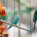 BEST PARAKEET BIRD CAGES