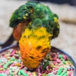 SIX BEST FOOD FOR CONURES