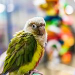SIX BEST GREENCHEEK CONURE CAGES