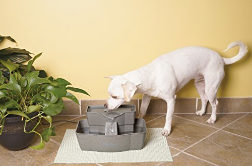 how to keep your indoor fountain clean