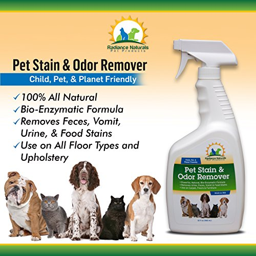 Best Product For Cat Urine Odor Removal