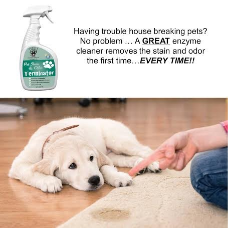 10 Best Enzymes Cleaner For Cat Urine Practical Pet Care